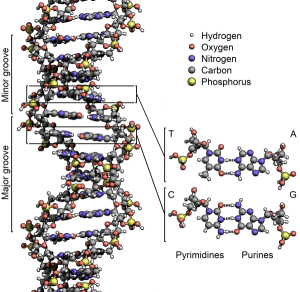 dna structure musical composition stephen p brown spb