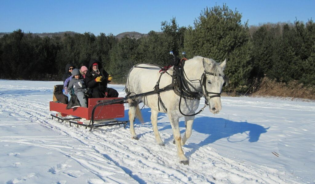 Horse-drawn sleigh rides walk or canter - they struggle at a trot.